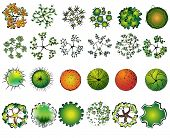 image of conifers  - A set of colored treetop symbols - JPG