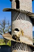 stock photo of saanen  - Swiss Saanen goat standing on a specially built tower that emulates the natural habitat of the goats for climbing up and down mountainous terrain - JPG