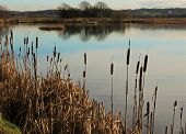 foto of bulrushes  - A peaceful scene in an English Nature reserve - JPG