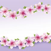 Stylish Floral Background, Greeting Card With Flower Sakura