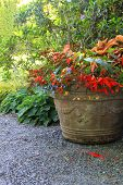 picture of planters  - Beautiful shade planter filled with trailing begonias and lobelia - JPG