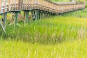 image of marsh grass  - A bridge spans a salt water marsh in the Mount Pleasant, South Carolina area.