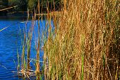stock photo of tallgrass  - Tallgrass next to a lake where fish are plentiful - JPG
