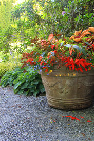 picture of lobelia  - Beautiful shade planter filled with trailing begonias and lobelia - JPG