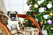 foto of christmas dog  - Funny - JPG