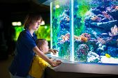 stock photo of zoo  - Happy laughing boy and his adorable toddler sister cute little curly girl watching fishes in a tropical aquarium with coral reef wild life having fun together on a day trip to a modern city zoo - JPG