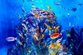 stock photo of biodiversity  - Colorful aquarium - JPG