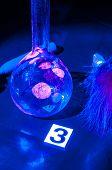 stock photo of dna fingerprinting  - True fluorescence fingerprint with ruler - JPG