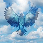 pic of spread wings  - Spread your wings success concept as a flying bird with open extended feathers on a blue sky as a positive achievement and opportunity symbol for reaching your goals and hope for the future - JPG