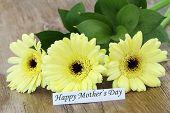 pic of gerbera daisy  - Happy Mother - JPG