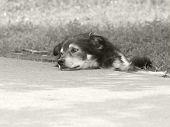 foto of sad dog  - Stray dog with very sad eyes lying on the roadside - JPG