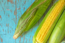 picture of sweet-corn  - Freshly picked ear of maize sweet corn cob on rustic blue wood background - JPG