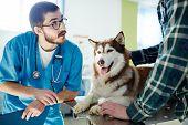 Vet expert consulting owner of husky dog in clinic poster