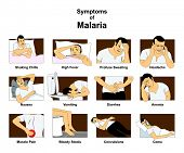Symptoms of Malaria infographic diagram with conceptual drawing including shaking chills fever sweat poster