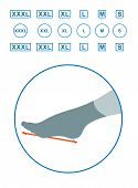 The Size Of The Foot In Humans. Foot Size Profile. Sizes Of Socks. Shoe Sizes. Scheme Of Foot Sizes  poster