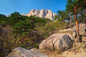 Ulsanbawi rock and pine trees in Seoraksan National Park, South Korea poster