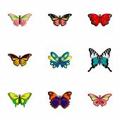 Types Of Butterfly Icons Set. Flat Set Of 9 Types Of Butterfly Icons For Web Isolated On White Backg poster