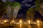 Palm Trees On The Beach Of Tel Aviv In Night Lighting