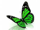 Beautiful Green Butterfly
