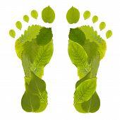 picture of carbon-footprint  - Green Carbon Leaf Footprint studio shot - JPG
