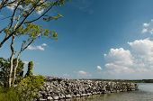 foto of irish moss  - old stone wall with trees at the lake - JPG