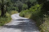 Country road on Corfu island, Greece