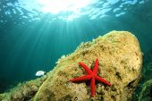 Sea Star Underwater in Ocean