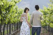 Happy young couple holding hands while walking through vineyard