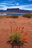 picture of potash  - Wild Flowers near Evaporation Pools with La Sale Mountains in the Back against beautiful blue sky  - JPG