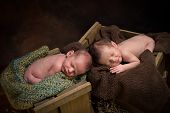 Newborn Twins Sleeping