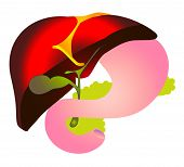 stock photo of hepatitis  - Vector Cheme Hepatitis B - JPG