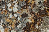 Background Of Stone Rock With Lichen And Moss