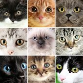 stock photo of puss  - Collage of different cute cats - JPG