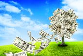 picture of prosperity sign  - Money tree growing in the middle of green meadow - JPG