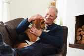 foto of petting  - Senior Man Relaxing At Home With Pet Dog - JPG