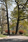 picture of turin  - Beautiful spring view of the Valentino - JPG