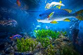 pic of biodiversity  - Coral Reef and Tropical Fish in Sunlight - JPG