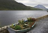 pic of galway  - Flower bed in a boat - JPG