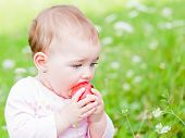 stock photo of nibbling  - Photo of an adorable baby girl nibble an apple - JPG