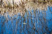 foto of scum  - reflections of trees in blue pond water - JPG