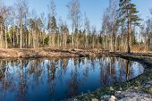 stock photo of scum  - reflections of trees in blue pond water - JPG