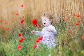 image of fall-wheat  - Adorable Baby Girl Playing With Red Poppy Flowers In A Wheat Field - JPG