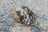 image of hermit  - Hermit Crab in a screw shell on tropical sea - JPG