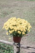 pic of marigold  - Blossom marigold in pots decorated on fence with vintage color filter stylish - JPG