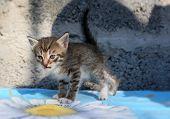 foto of homeless  - Small striped homeless kitten grey at the animal shelter - JPG