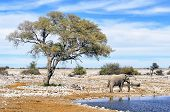 pic of tusks  - Etosha National Park is a national park in northwestern Namibia - JPG