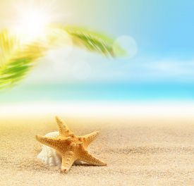 foto of starfish  - starfish and starfish on the sandy beach and palm at ocean background - JPG