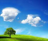 Постер, плакат: Дерево и голубое небо