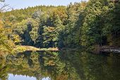 Green Forest And River. Forest Lake. The River Flows Among Trees. Beautiful View Of Nature. Landscap poster