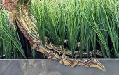 Dinosaur Paw Skeleton Gold Plated. Paw Of A Dinosaur On Green Grass. poster